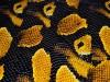 Предатор желтый - пленка для аквапечати (шир. 50см)