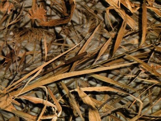 Камуфляж Сигма - пленка для аквапринта (шир. 100см)